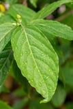 Естественная картина предпосылки заводов листьев упадите вода листьев Стоковое Изображение
