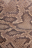 естественная кожа питона Стоковое Изображение RF