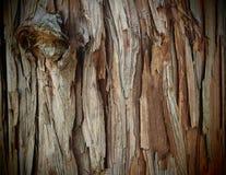 Естественная кора дерева текстуры Стоковое Фото
