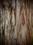 Естественная кора дерева текстуры Стоковое фото RF
