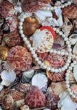 Естественная красивая предпосылка моря от много раковин различного s стоковые фотографии rf