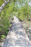 Естественная красивая сцена дорожки деревянного моста в мангрове для Стоковое Фото