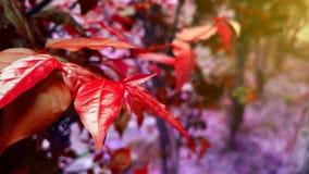 Естественная красная предпосылка ландшафта заводов стоковое фото rf