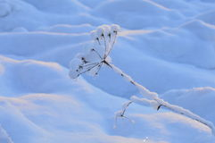 Естественная красота заморозка зимы в утре outdoors Стоковое Фото