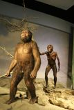 Естественная обезьяна в Национальном музее Тайване стоковая фотография