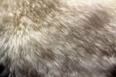 Естественная овчина стоковые фото