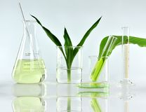 Естественная органическая ботаника и научное стеклоизделие, альтернативная медицина травы, естественные продукты красоты заботы к стоковые фотографии rf