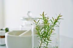 Естественная органическая ботаника и научное стеклоизделие, альтернативная медицина травы, естественные продукты красоты заботы к стоковые изображения rf