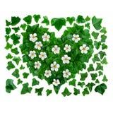 Естественная органическая предпосылка картины сделанная из зеленых листьев плюща и белых цветков Стоковая Фотография