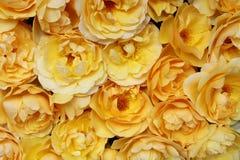 Естественная предпосылка желтых роз Плоское положение Взгляд сверху Концепция Romance и влюбленности карточки Стоковая Фотография