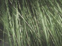Естественная предпосылка зеленой высокорослой травы, фильтрованного года сбора винограда стоковое фото rf