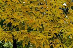 Естественная предпосылка осенних листьев в районе Vrabnitsa Стоковое фото RF
