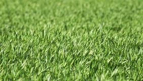 Естественная предпосылка с много молодой зеленой сочной травой растя в аграрном поле весной на ясный день стоковая фотография