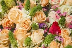 Естественная предпосылка роз Стоковые Фотографии RF