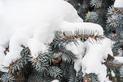 Естественная предпосылка для голубых конусов и игл ели под снегом Стоковая Фотография RF