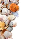 Естественная предпосылка seashells Стоковые Изображения RF