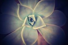 Естественная предпосылка succulent Стоковое Фото