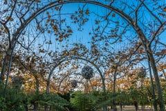 Естественная привлекательность на del Poblenou Parc del Центра в Барселоне, Испании Стоковое Фото