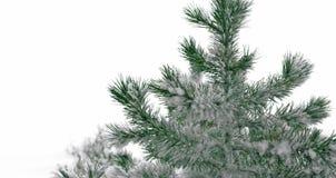Естественная рождественская елка предусматриванная в снеге стоковая фотография rf