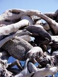 естественная скульптура Стоковое Изображение