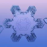 Естественная снежинка зимы стоковые фотографии rf