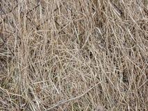 Естественная текстура высушенной травы Естественная предпосылка Стоковое Изображение RF