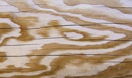 естественная текстура деревянная Стоковая Фотография