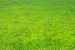 Естественная текстура зеленой травы Стоковые Фотографии RF