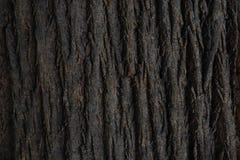 Естественная текстура коры дерева Безшовная текстура коры дерева Бесконечная деревянная предпосылка для заполнения или графическо стоковая фотография rf