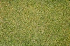 Естественная трава Стоковые Фото