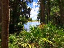 Естественная Флорида Стоковое Изображение