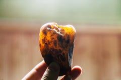 Естественная янтарная текстура Пестротканая предпосылка для рекламировать и знамен Смола превращенная в камень годом сбора виногр Стоковые Изображения RF