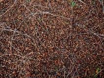Естественная ocher предпосылка стоковое фото rf