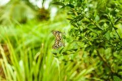 Естественное влюбленности в природе Стоковое фото RF