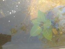 естественное дерево на фото воды на открытом воздухе стоковые изображения