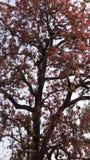 Естественное дерево стоковое изображение