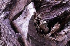 Естественное деревянной структуры текстуры старое коричневое стоковое изображение rf