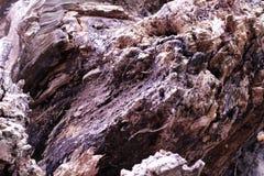 Естественное деревянной структуры текстуры старое коричневое стоковая фотография rf