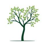Естественное зеленое дерево с листьями также вектор иллюстрации притяжки corel Стоковое фото RF