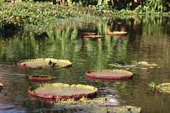 Естественное место раздумья - зеленый цвет выходит на поверхность озера и lo Стоковые Изображения RF