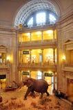 естественное музея истории национальное стоковые изображения