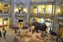 естественное музея истории национальное стоковое фото rf