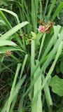 Естественное падение росы после дождя на зеленых лист Стоковые Фото