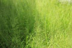 естественное предпосылки зеленое Стоковое Изображение
