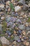 Естественное река облицовывает предпосылку Стоковое фото RF