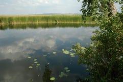 естественное тело воды Стоковые Фотографии RF