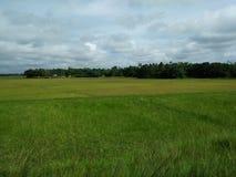 естественное фото если Бангладеш Стоковые Изображения RF