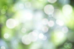Естественное bokeh леса стоковые изображения