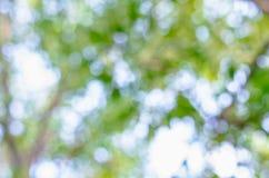 Естественное Bokeh, запачканное bokeh Стоковые Фото