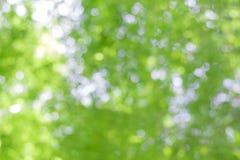 Естественное bokeh, зеленое bokeh Стоковые Фото